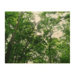 Looking Up to Summer Trees Wood Wall Decor