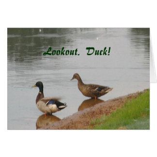 Lookout Duck Birthday card