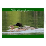 Loon and baby - thinking of you greeting card