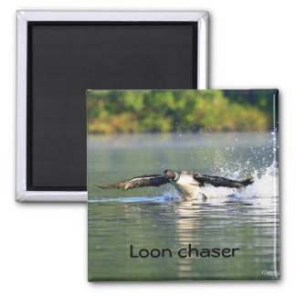 Loon chaser Magnet