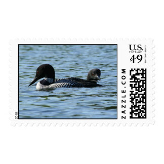 Loon couple postage stamp