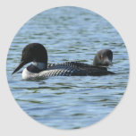 Loon couple stickers