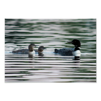 Loon Family Print