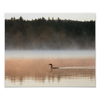 loon in the morning fog poster