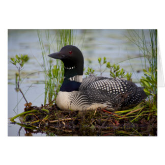 Loon on Nest Stationery Note Card