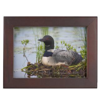 Loon on nest keepsake box