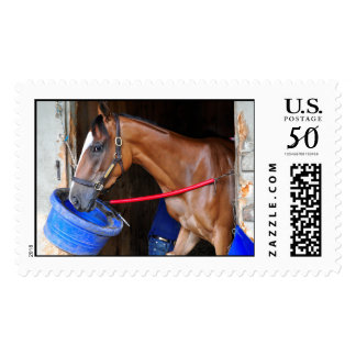 Loon River at Saratoga Postage