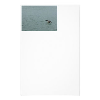 Loon Stationery