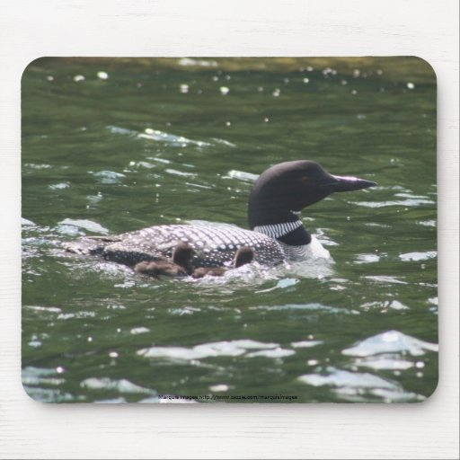 Loon with babies 2 mouse pad