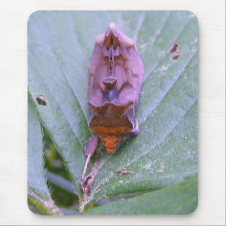 Looper Moth ~ mousepad