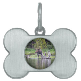 Loose Moose Pet Name Tag