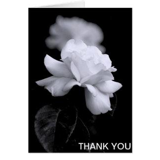 Loose White Leaf Rose On Black Background Card