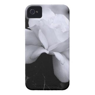 Loose White Leaf Rose On Black Background iPhone 4 Case