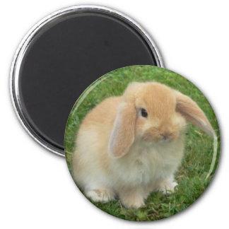 lop 2 inch round magnet
