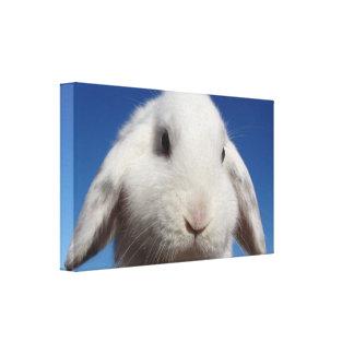 Lop blanco lienzo envuelto para galerías