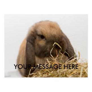 Lop eared bunny postcard