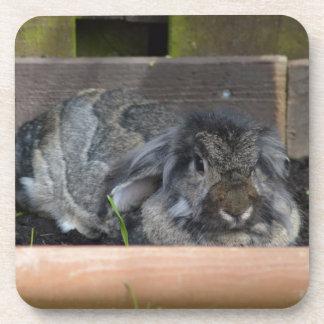 Lop eared rabbit beverage coaster