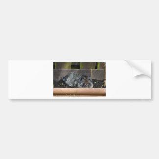 Lop eared rabbit bumper stickers