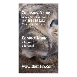 Lop Eared Rabbit Double-Sided Standard Business Cards (Pack Of 100)