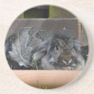 Lop eared rabbit coasters