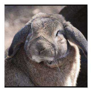 Lop Eared Rabbit Announcement