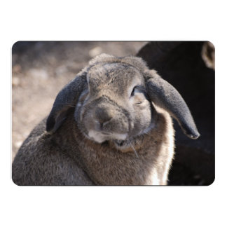 Lop Eared Rabbit Personalized Invitations