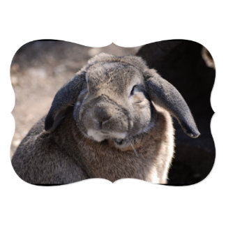 Lop Eared Rabbit Custom Invitation