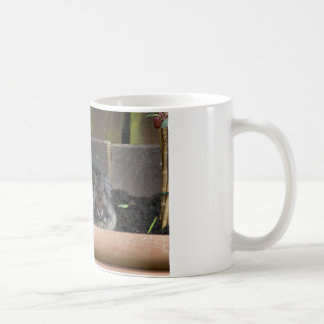 Lop eared rabbit mugs
