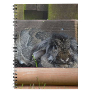 Lop eared rabbit spiral note book