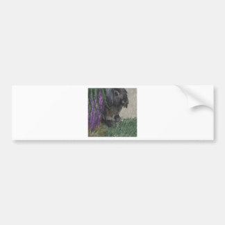 Lop eared  rabbit painting bumper sticker