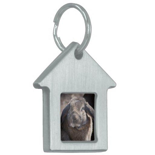 Lop Eared Rabbit Pet ID Tags