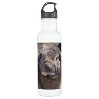 Lop Eared Rabbit 24oz Water Bottle