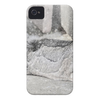 Lop  eared rabbit sleeping iPhone 4 cases