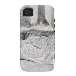 Lop  eared rabbit sleeping vibe iPhone 4 cover