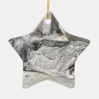 Lop  eared rabbit sleeping Double-Sided star ceramic christmas ornament