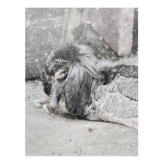 Lop  eared rabbit sleeping postcard
