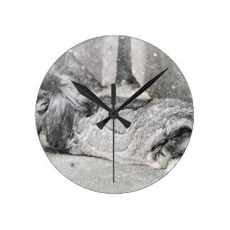 Lop  eared rabbit sleeping round clock