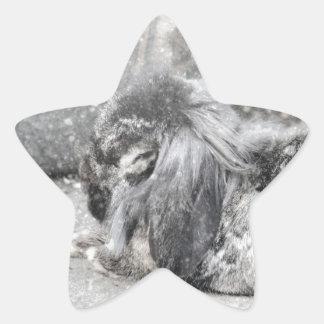 Lop  eared rabbit sleeping star sticker