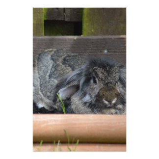 Lop eared rabbit personalized stationery