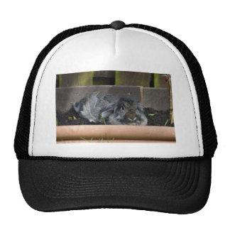Lop eared rabbit trucker hat