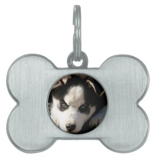 Lop Eared Siberian Husky Sled Dog Puppy 2 Pet Tags