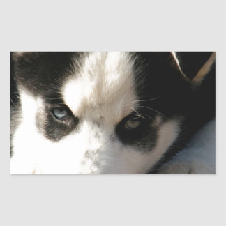 Lop Eared Siberian Husky Sled Dog Puppy 2 Rectangle Stickers