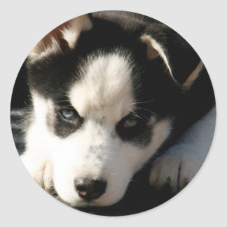 Lop Eared Siberian Husky Sled Dog Puppy 2 Round Sticker