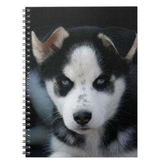 Lop Eared Siberian Husky Sled Dog Puppy Spiral Note Book