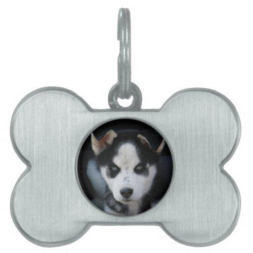 Lop Eared Siberian Husky Sled Dog Puppy Pet ID Tags