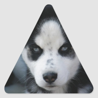 Lop Eared Siberian Husky Sled Dog Puppy Triangle Sticker