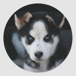Lop Eared Siberian Husky Sled Dog Puppy Round Sticker