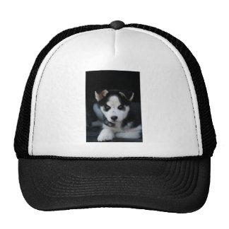 Lop Eared Siberian Husky Sled Dog Puppy Trucker Hat