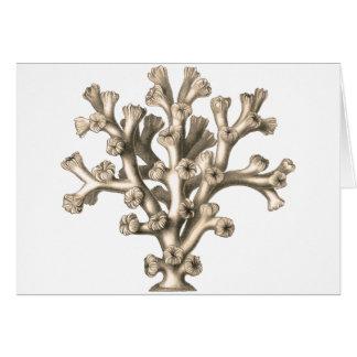 Lophohelia - Coral Greeting Card
