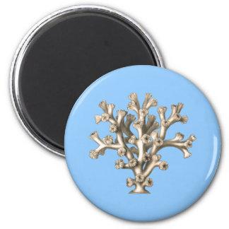 Lophohelia - Coral Magnets